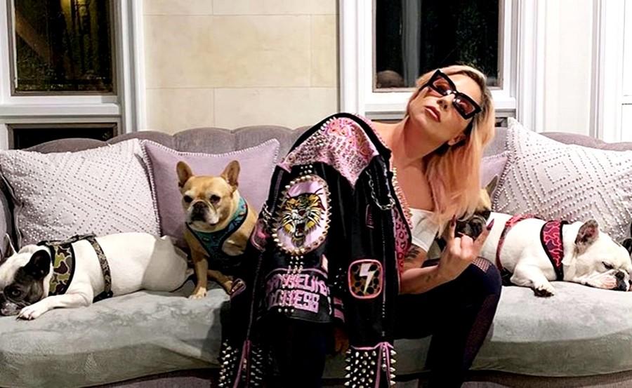 Леди Гага с собаками